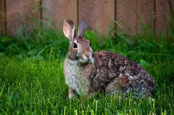 兔子受到惊吓后会怎样 简单给大家讲解图片