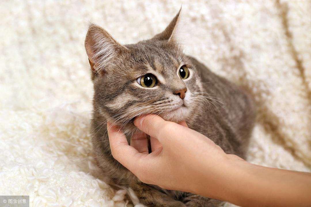 自制颗粒猫粮简单 自己怎么制作颗粒状的猫粮图片