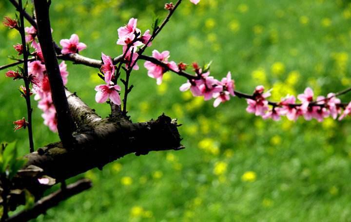 关于春的成语 关于春天的成语详解图片