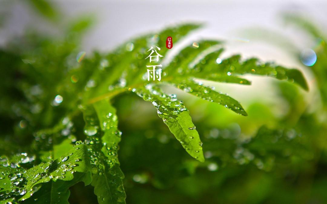 关于谷雨的古诗 关于谷雨的古诗列述图片