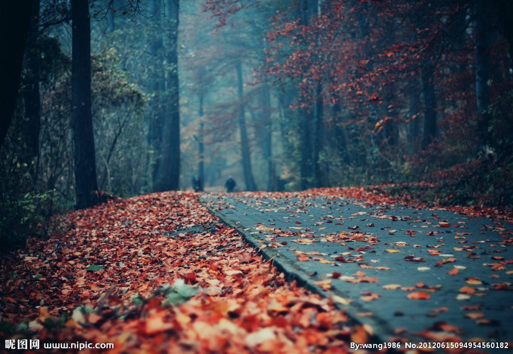 寒风吹起细雨淋漓是什么歌 这首歌你还记得吗图片