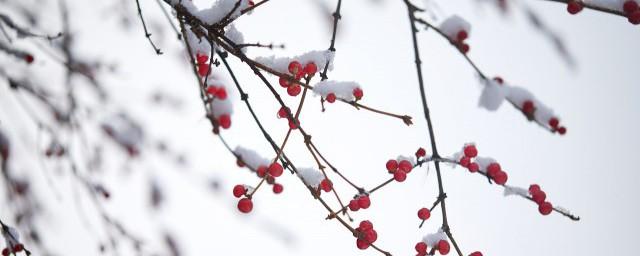 冬天大雪早安心语 适合雪天的早安心语图片