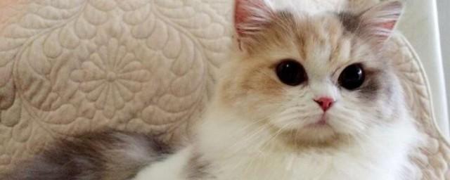 折耳猫怎么培育出来的解释,理解折耳猫如何培育出来的