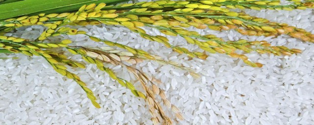 糯米是怎么种出来的解释,理解怎么种糯米