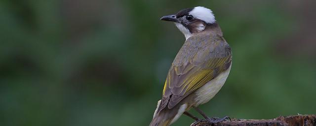 吃害虫的益鸟有哪些解释,理解吃害虫的益鸟介绍
