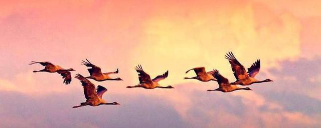 春天大雁往哪里飞须知道