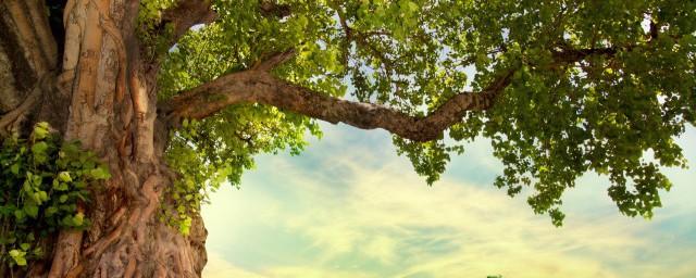 树木的年轮疏密的朝向,对于树木的年轮疏密朝向是怎样的的要点