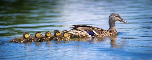 盐水鸭是哪里的特产解释,理解盐水鸭是什么地方的特产