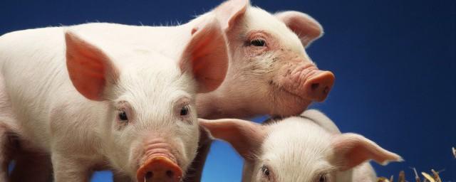 猪粮比什么意思须知道