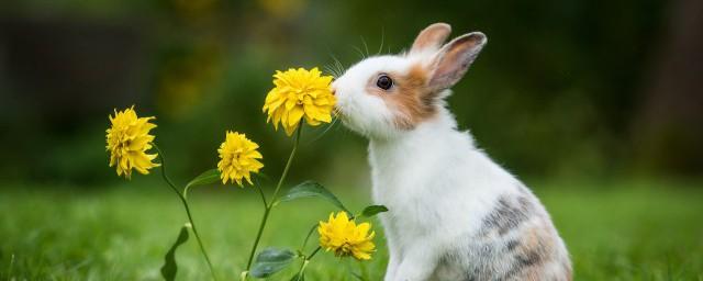 梦见兔子是什么意思周公解梦解释,理解梦见兔子好不好
