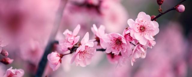 梅花的花瓣是啥形状的相关解释