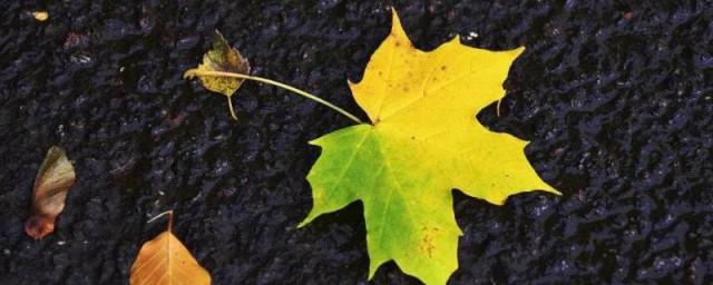 梧桐树叶子长得像什么,原来梧桐树叶子长像什么的比喻句