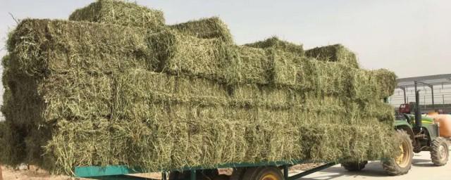 大量苜蓿草的储存办法怎样,大量苜蓿草的储存办法有什么好吗