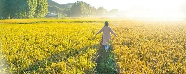 稻谷储存办法防虫,原来怎样保存稻谷