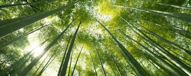 竹子的茎是啥样子的;对于竹子的茎长什么样介绍