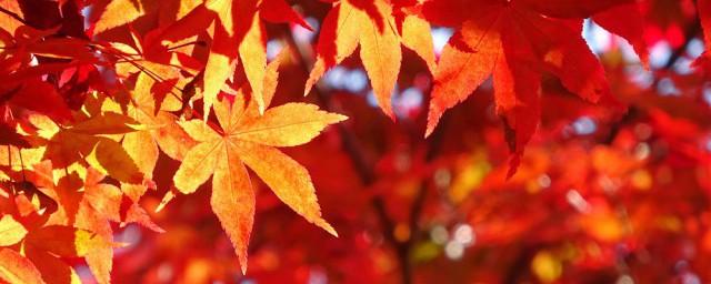 为啥树叶会变黄掉落;对于树叶会变黄掉落的原因介绍