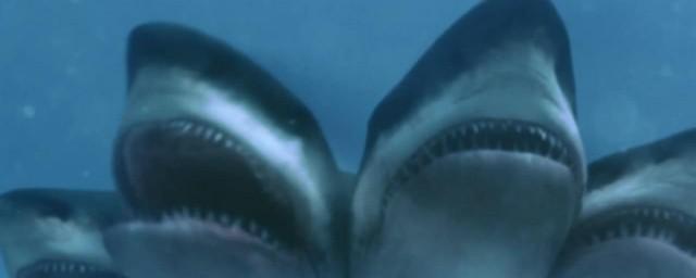鲨鱼死了叫什么;对于鲨鱼死了的名称介绍
